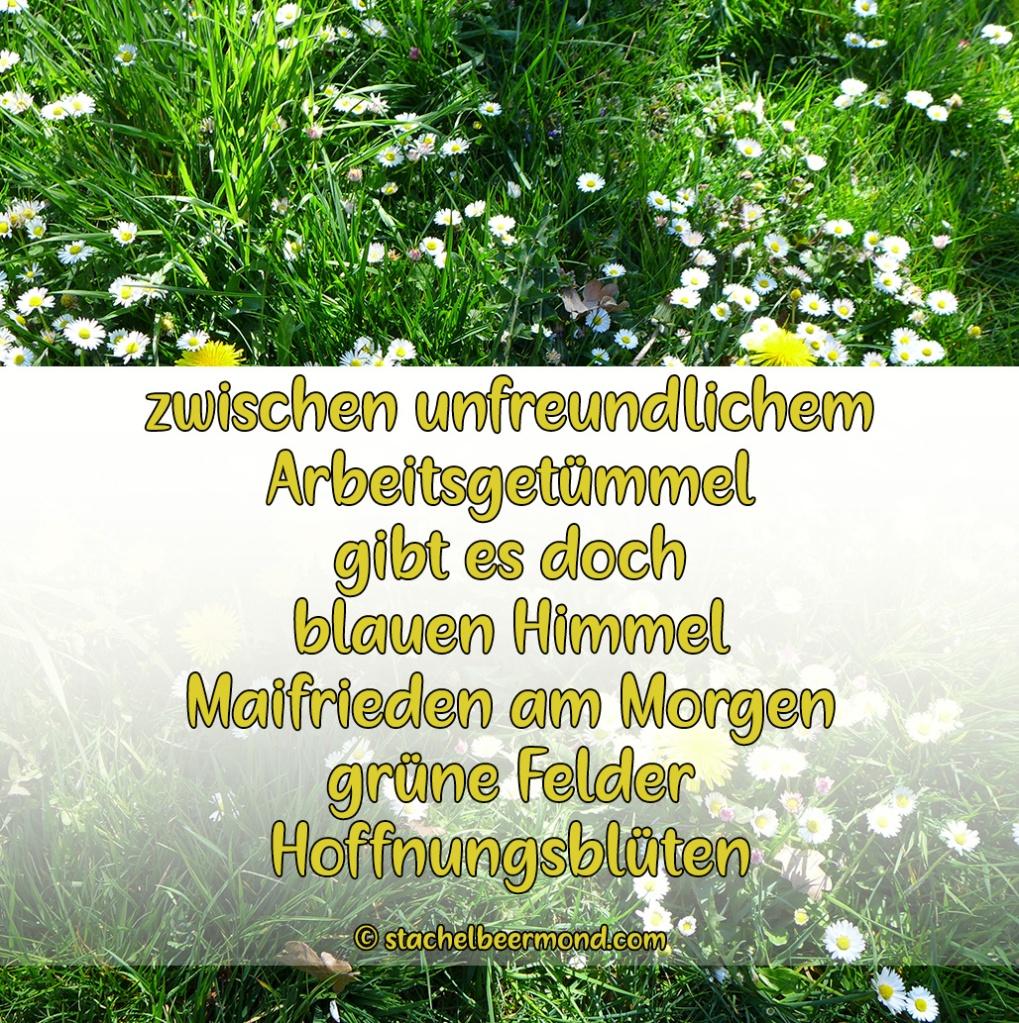 zwischen unfreundlichem  Arbeitsgetümmel  gibt es doch blauen Himmel Maifrieden am Morgen grüne Felder Hoffnungsblüten